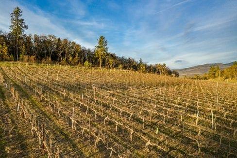 Pioneer-Road-Vineyard-Estate-Oregon-10