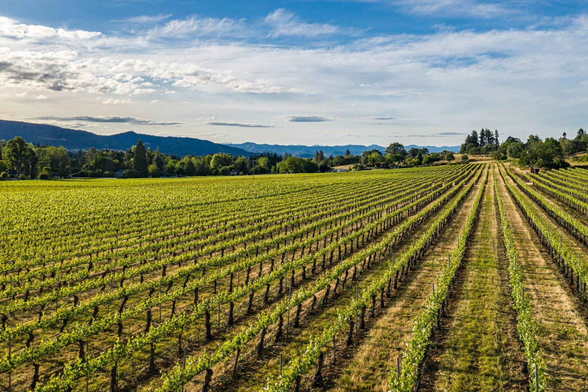Griffin Creek Vineyard