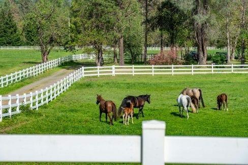 03 Horse Property (25)