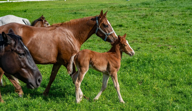 03 Horse Property (26)