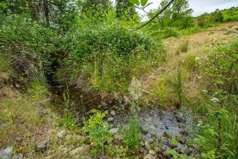 Beals Creek (7)