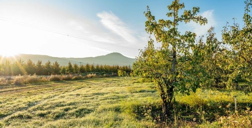 Naumes Orchard