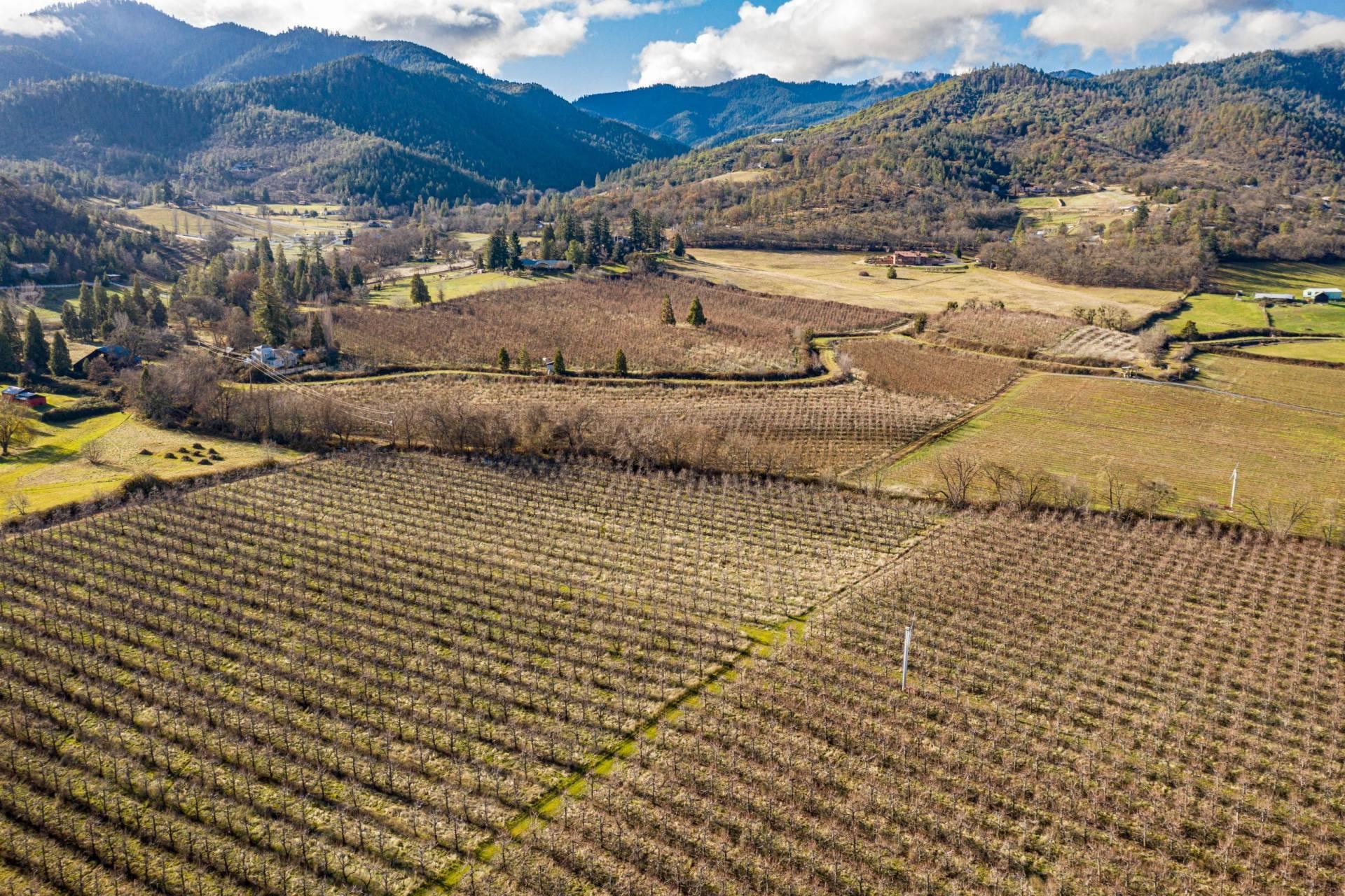 Carolina West Orchard