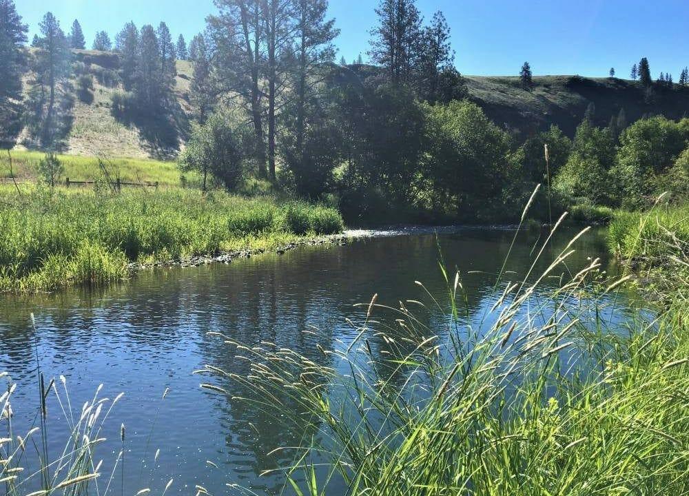 Chesnimnus Creek 18