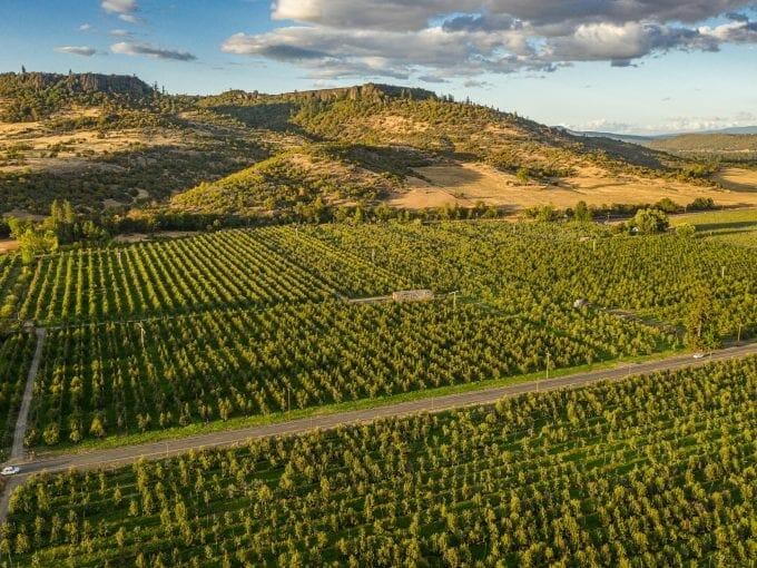Hull Orchard White City Oregon