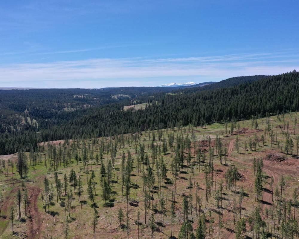 Blue Mountains 161 Acres