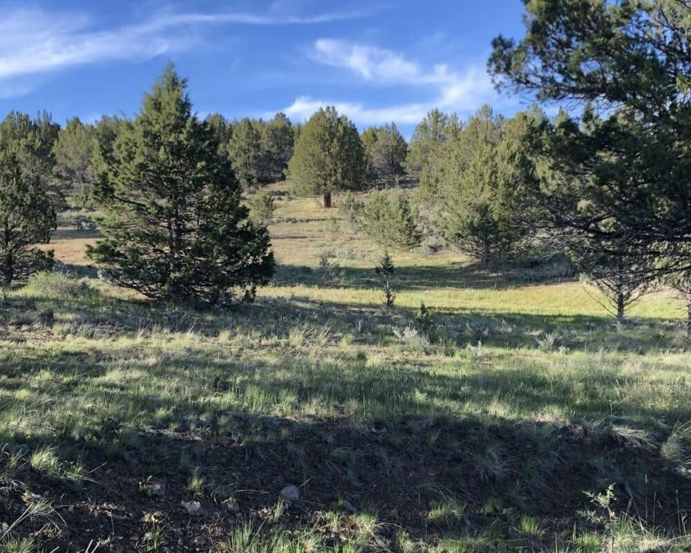 Sunshine Ridge 40 Acres