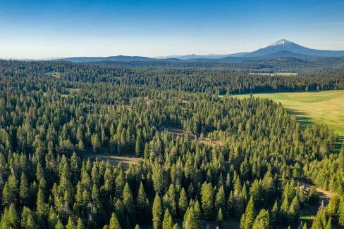 DIM 255 Ashland Oregon