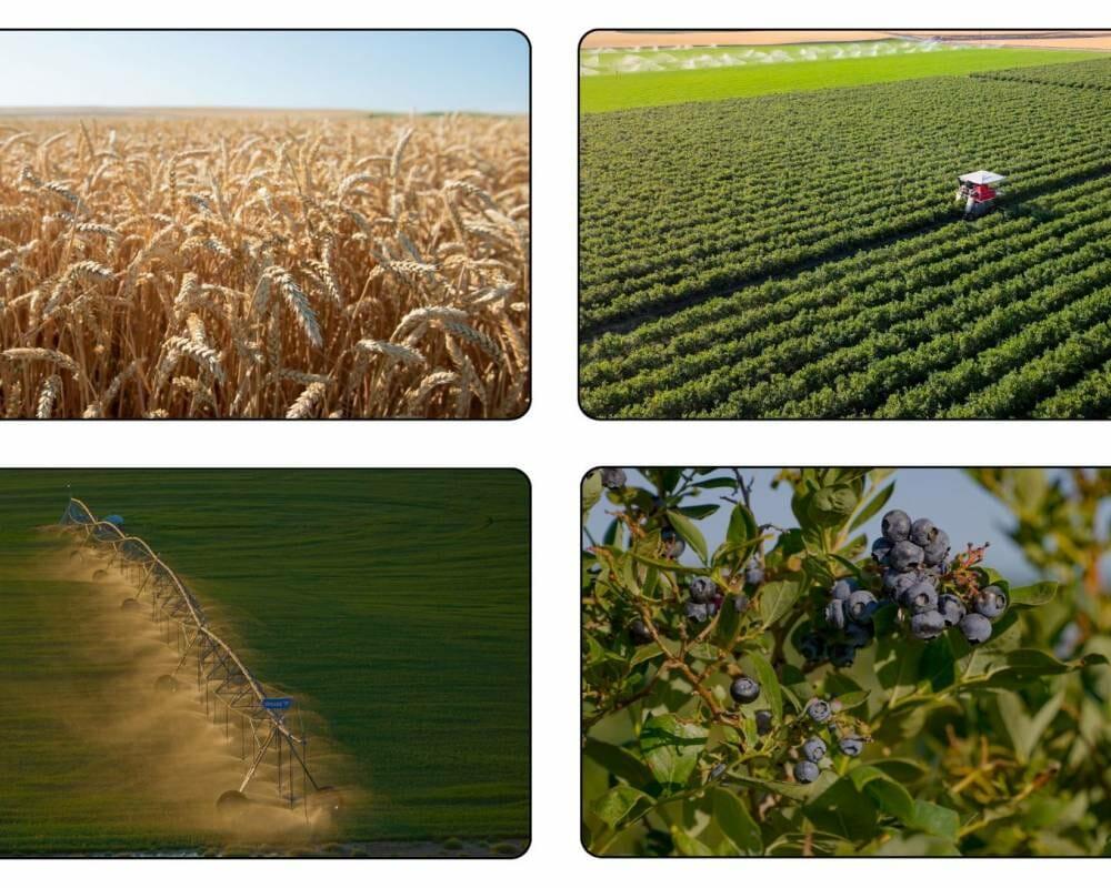 Columbia Basin Farmland