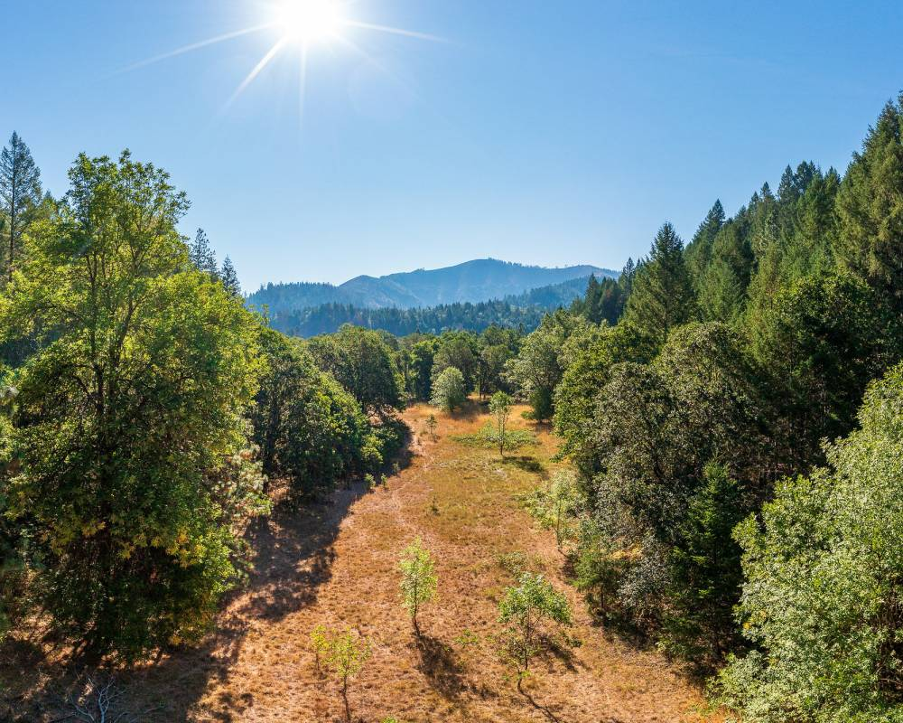 Redwood 40